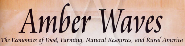 Amber waves logo cropped