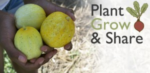 Plant Grow and Share 615x300_lemon cukes banner
