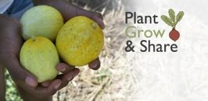 Banner for Plant Grow Share 615x300_lemon cukes_2